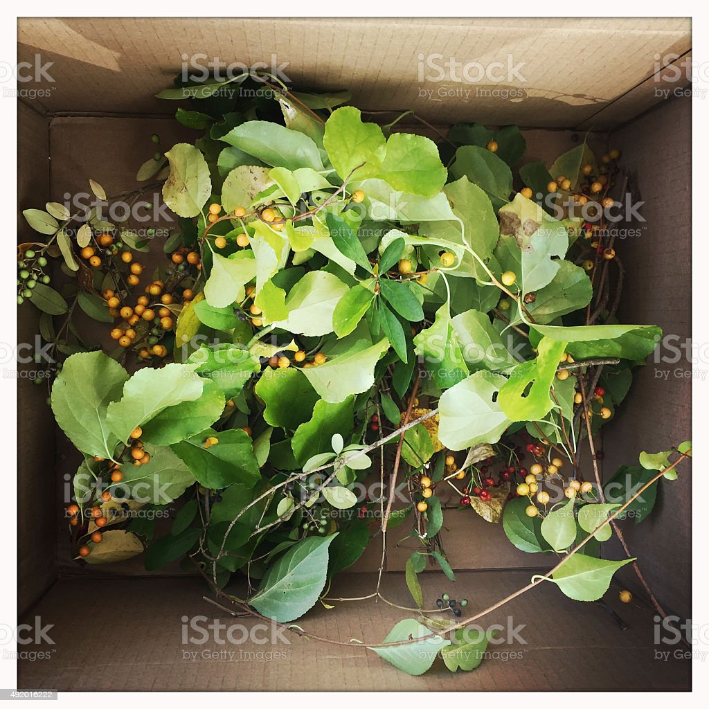 Cardboard Box with Greens and Berries stock photo
