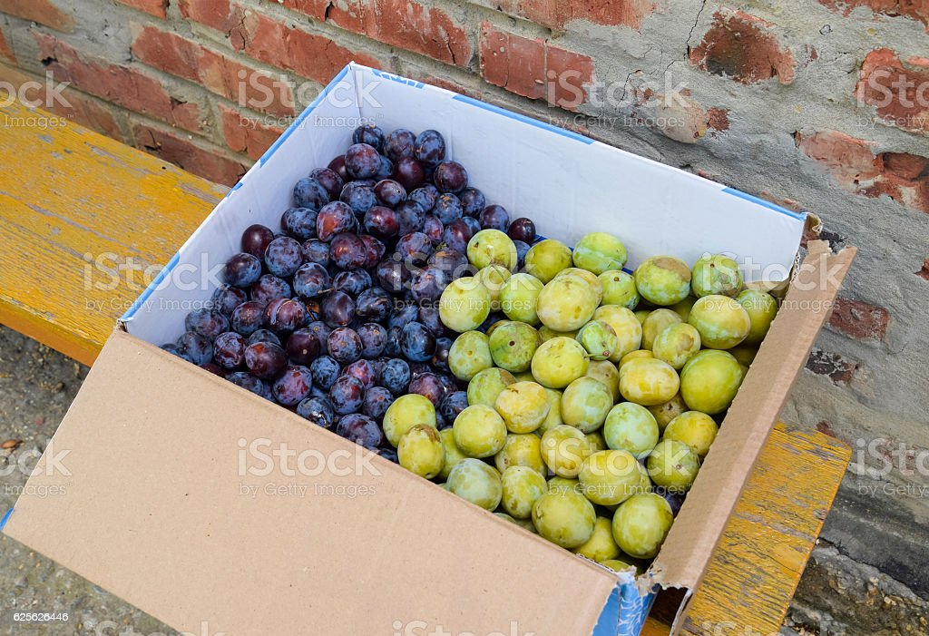 Cardboard box with plums stock photo