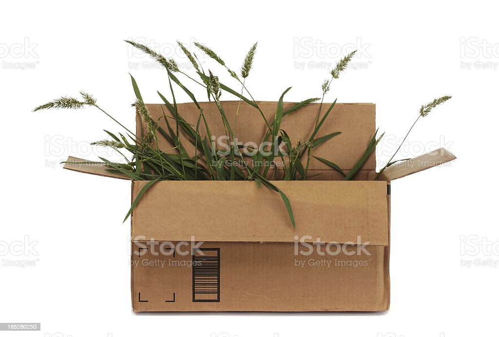 Cardboard Box With Weeds Inside stock photo