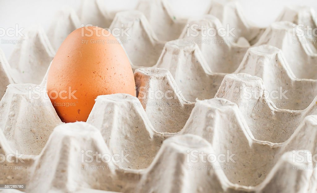 cardboard tray one brown egg on a white background stock photo