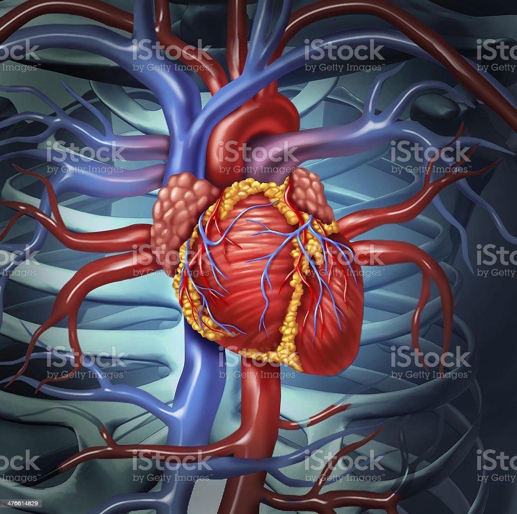 Cardiovascular Human Heart stock photo