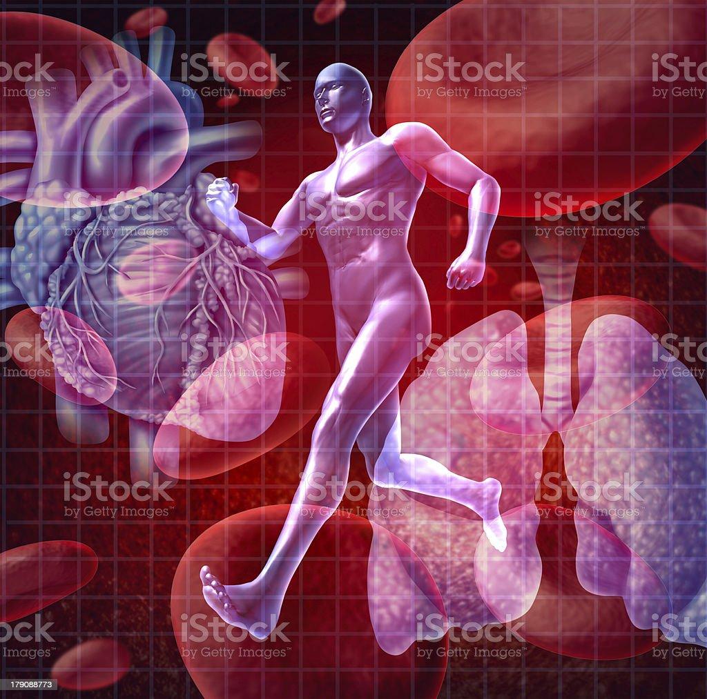 Cardiovascular System royalty-free stock photo