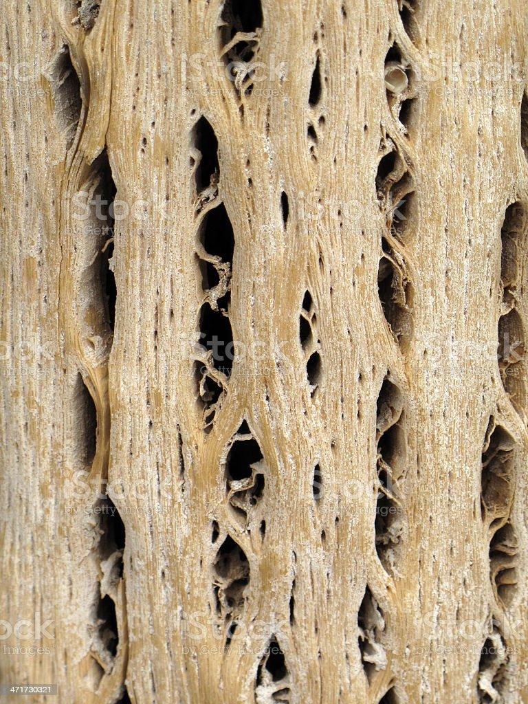 Cardon wood royalty-free stock photo