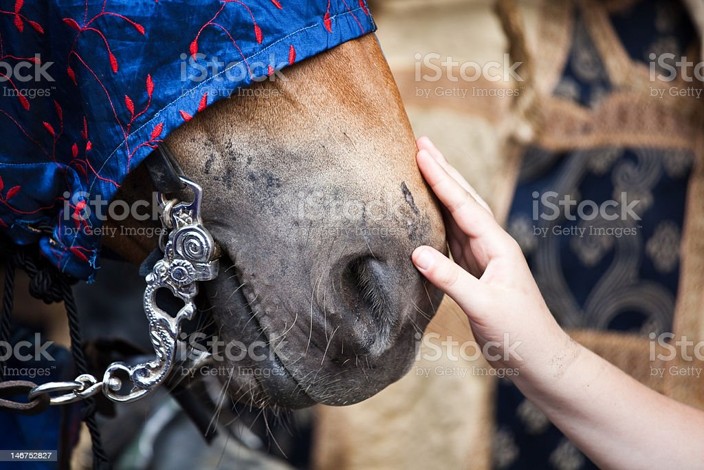 Care for the horse royalty-free stock photo