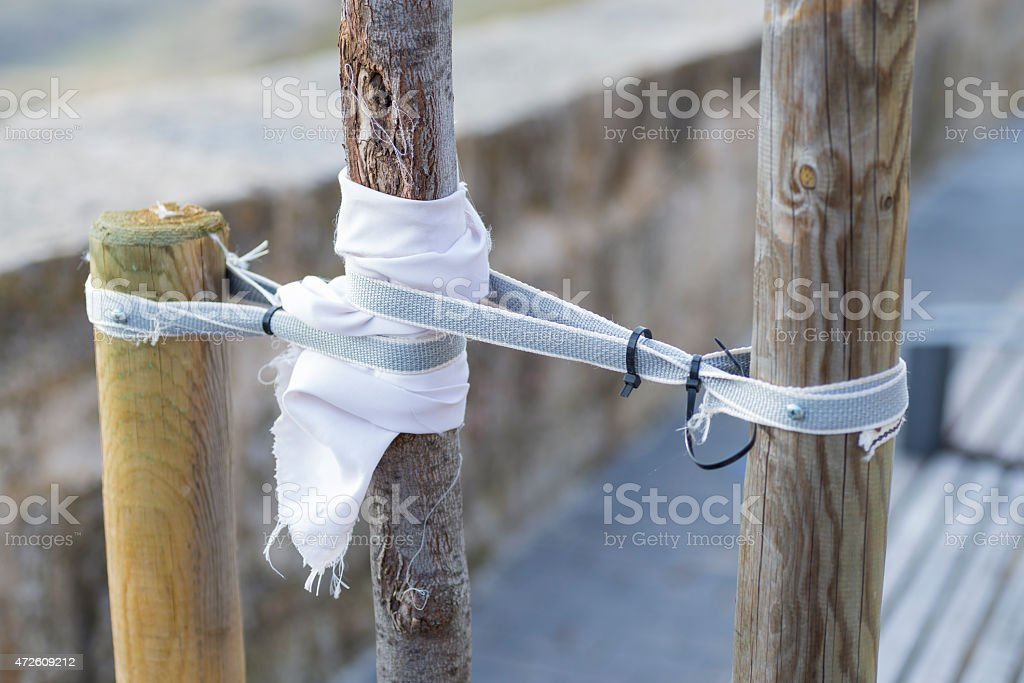 Care of a tree. stock photo