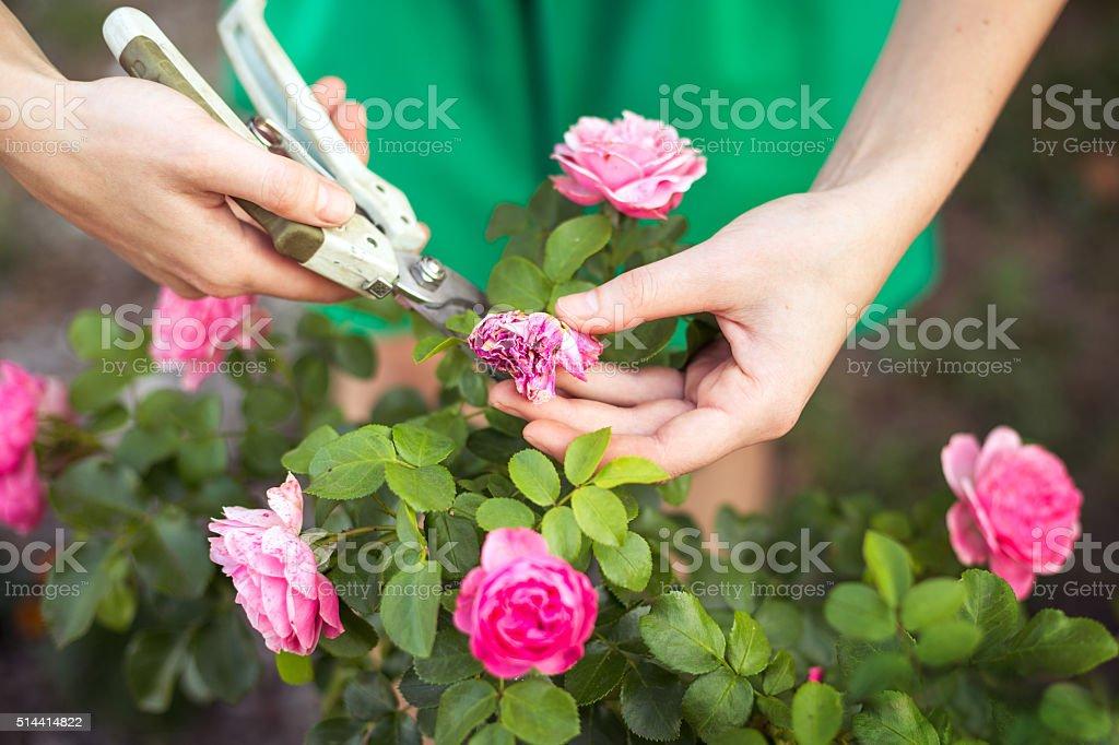 care of garden stock photo