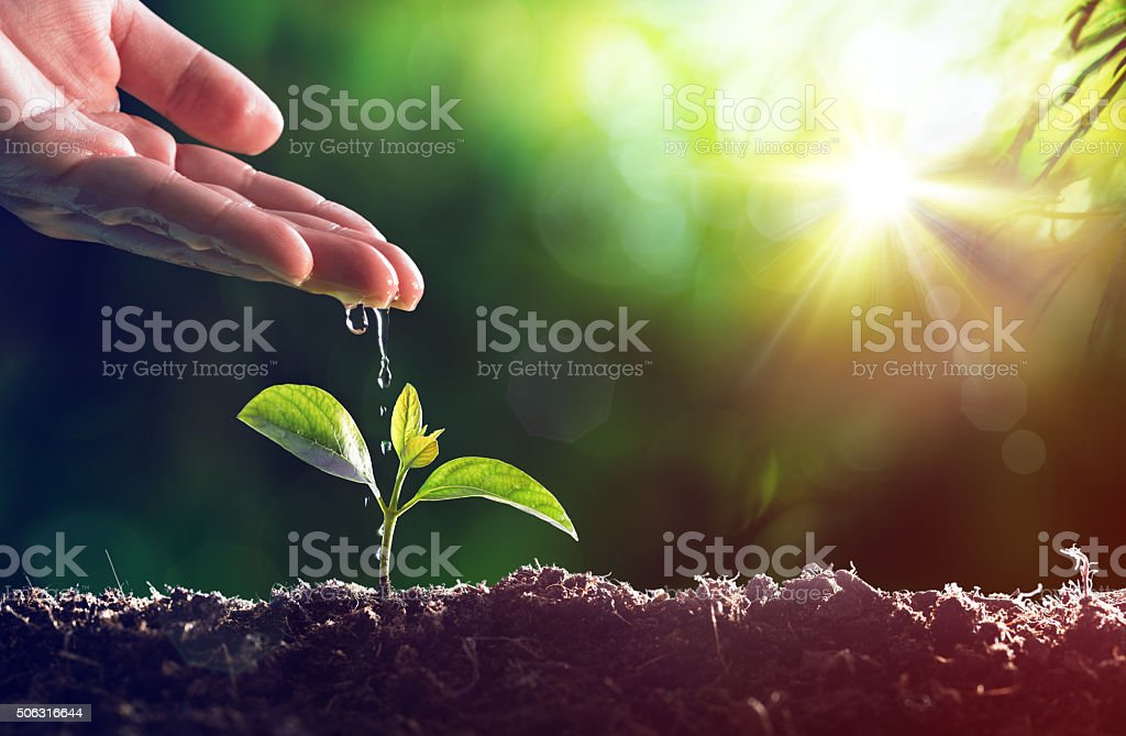 Care Of New Life - Baby Plant stock photo