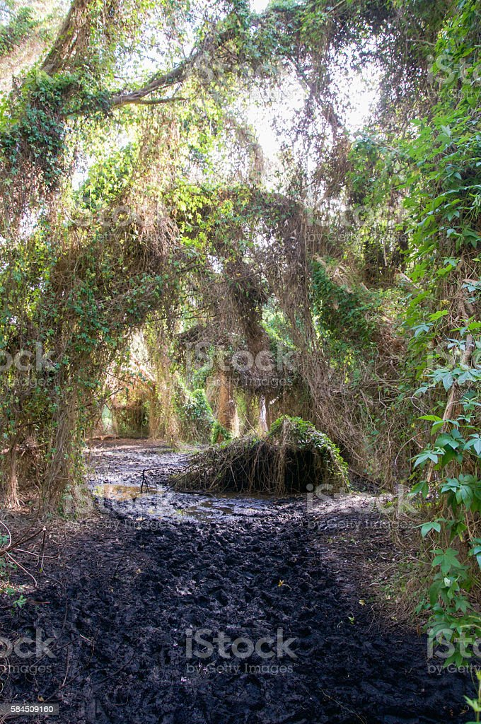 Careniup Wetland: Muddy Forest stock photo