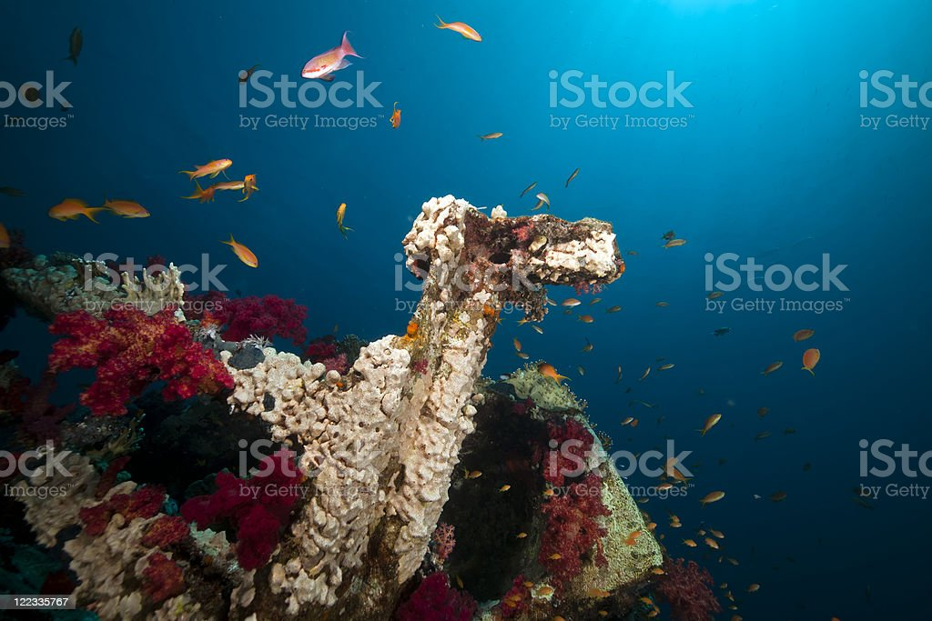 Cargo of the Yolanda wreck. royalty-free stock photo