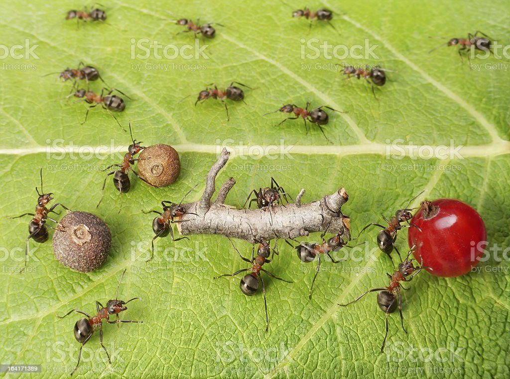 cargo traffic at ants work path stock photo