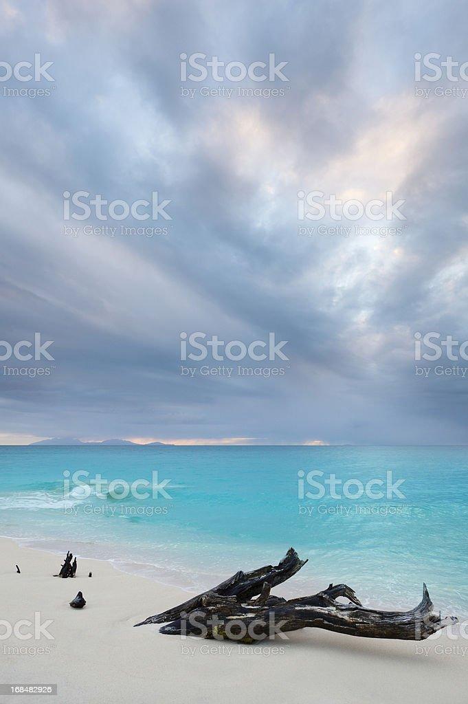 Caribbean Beach Driftwood With Dramatic Sky stock photo