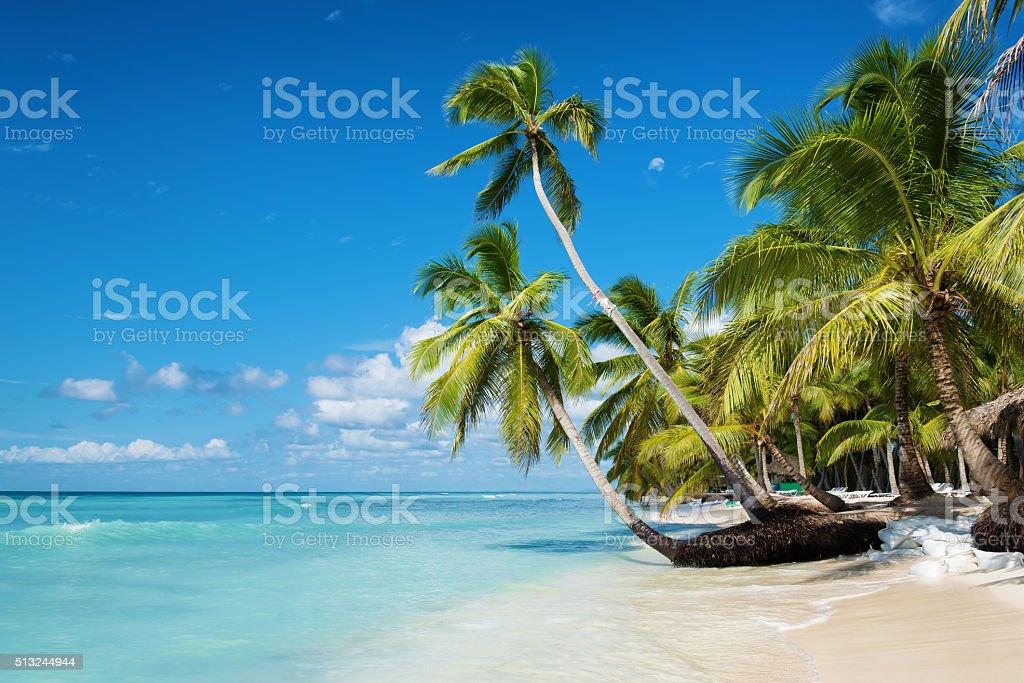Caribbean beach in Saona island, Dominican Republic stock photo