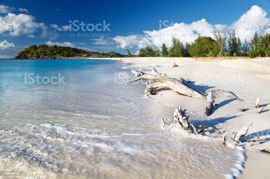 Caribbean Beach With Driftwood stock photo