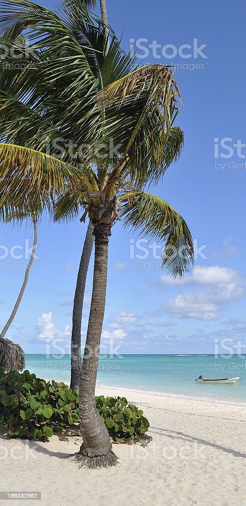 Caribbean Beach with Palm Tree royalty-free stock photo