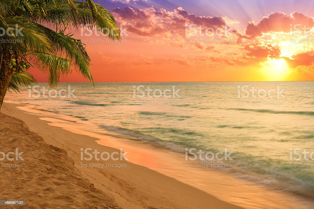 Caribbean beach with palm trees at sunset stock photo