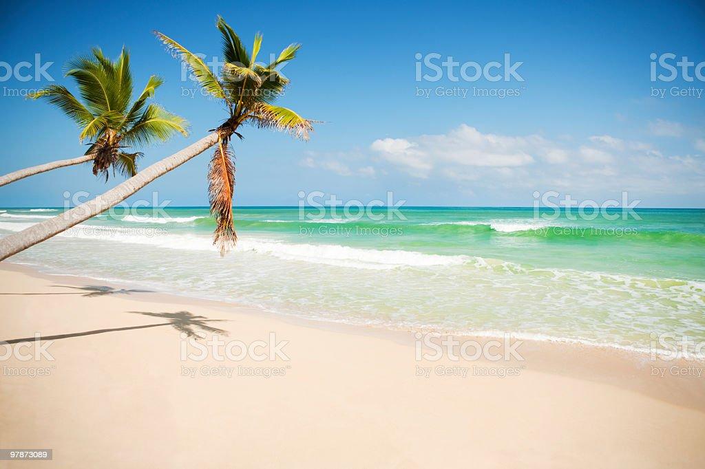 Caribbean coast royalty-free stock photo