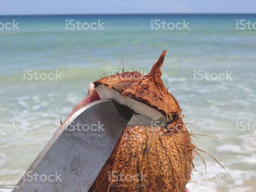 Caribbean Coconut stock photo