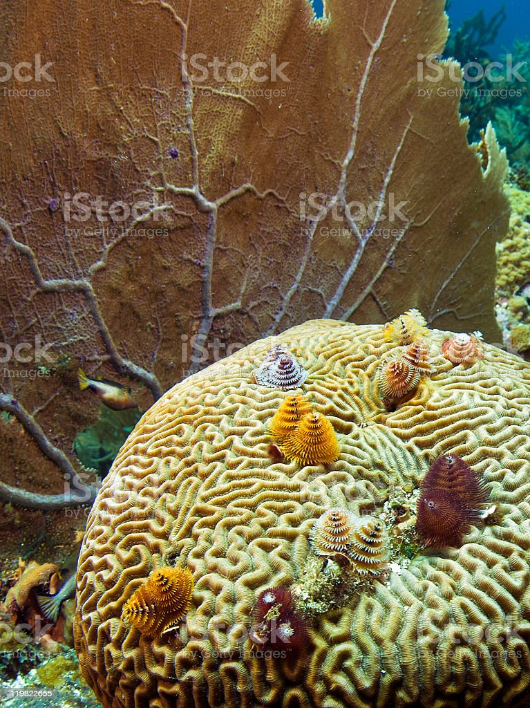 Caribbean coral gardens stock photo