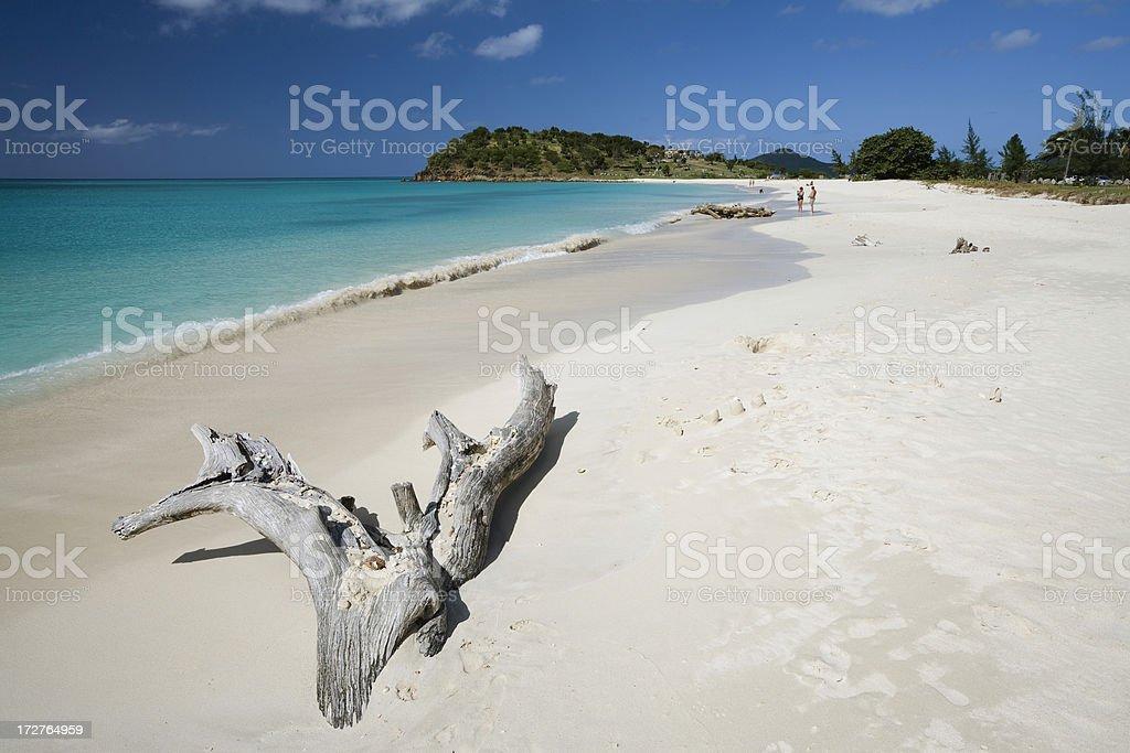 Caribbean Driftwood stock photo