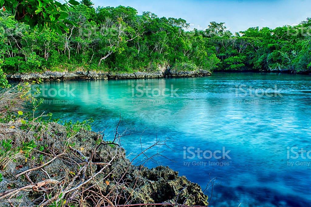 Caribbean Jungle Meets Ocean stock photo