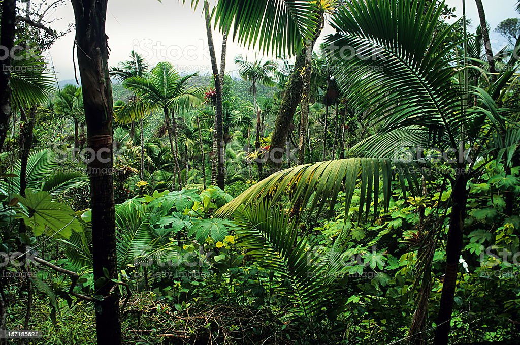 Caribbean National Forest, El Yunque stock photo