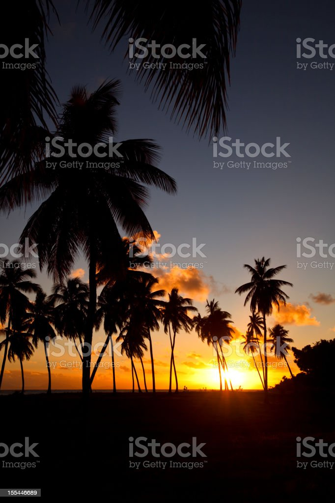 Caribbean Palm Tree Sunset stock photo