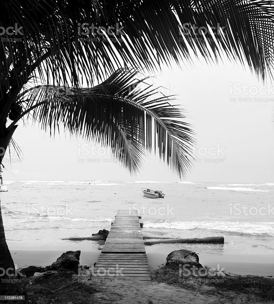 Caribbean Palms and Boardwalk royalty-free stock photo