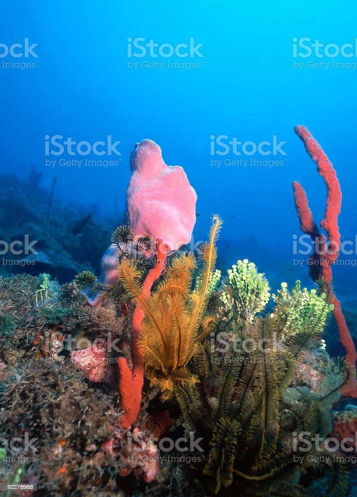 Récifs des Caraïbes photo libre de droits