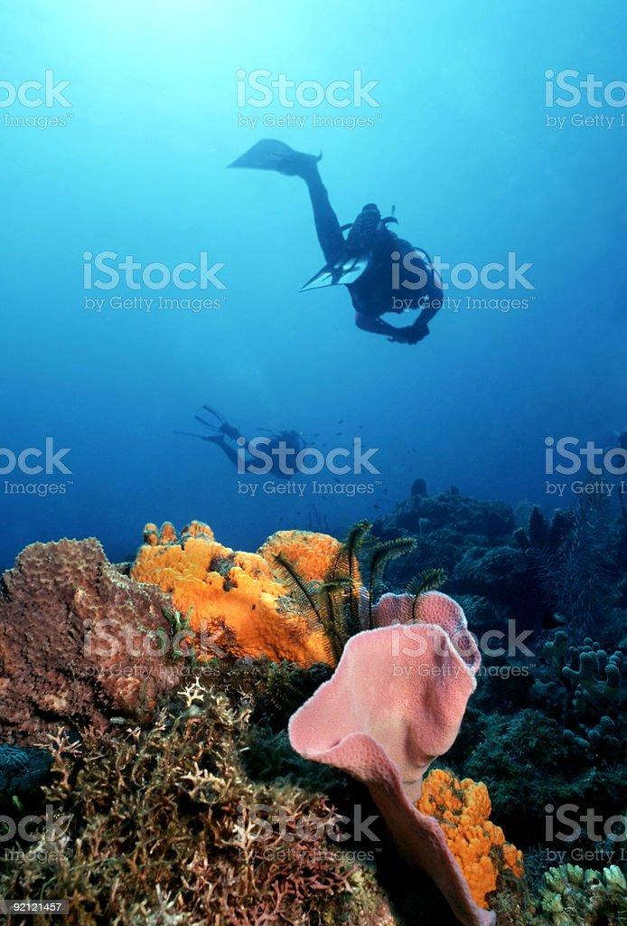 Colorés Caraïbes Reef photo libre de droits