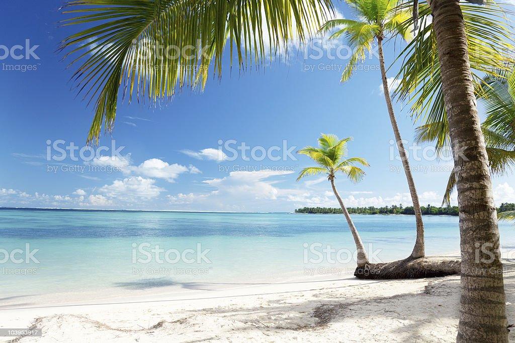 Caribbean sea and coconut palms royalty-free stock photo