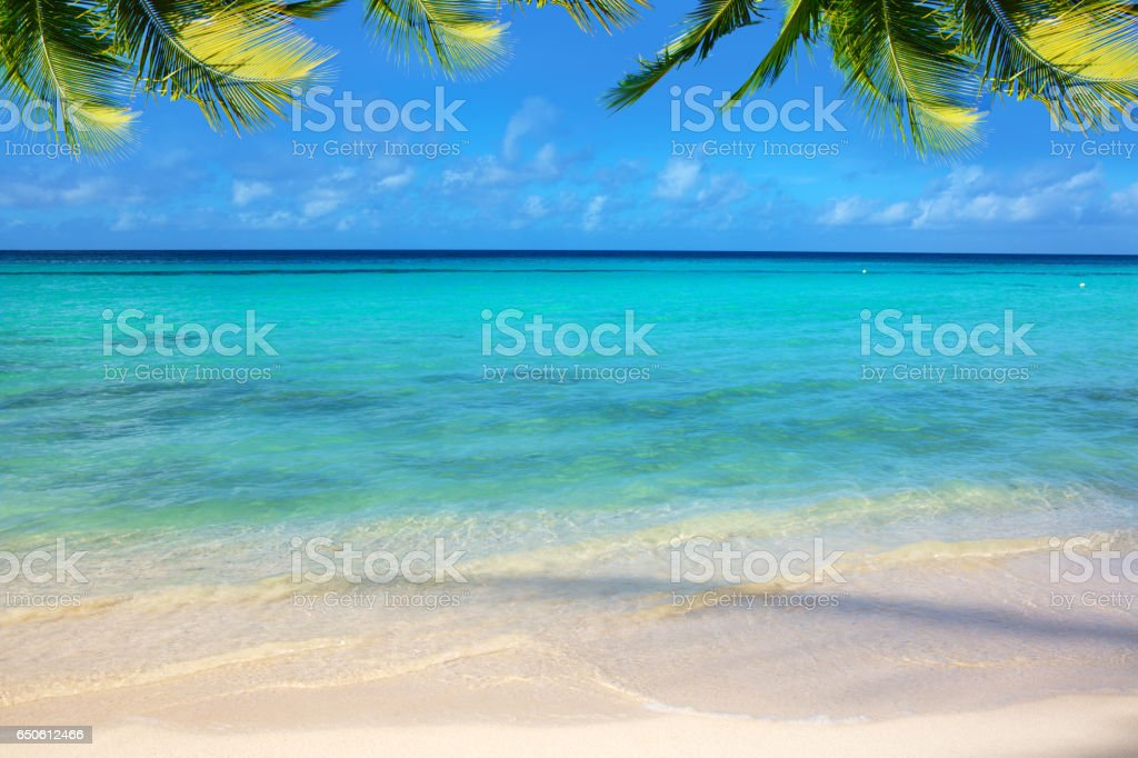 Caribbean sea and palm leaves stock photo