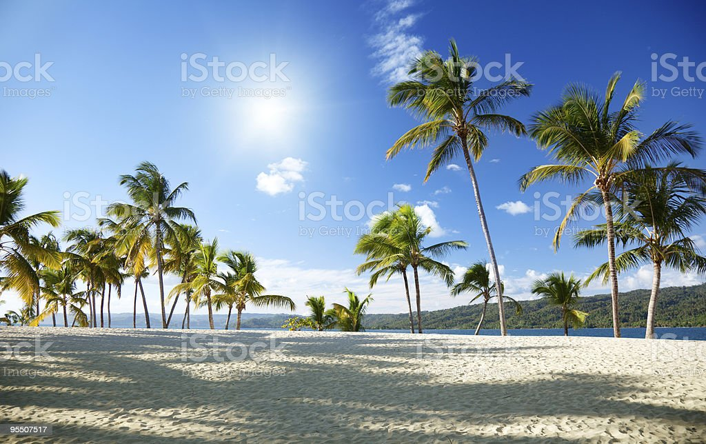 caribbean sea and palm royalty-free stock photo