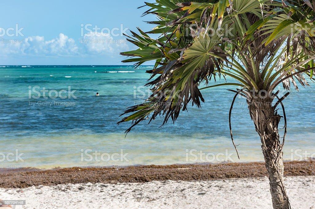 Caribbean Sea and Palm Tree stock photo