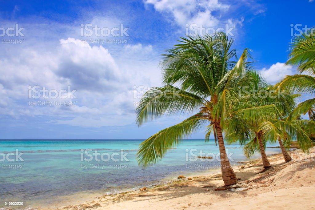 Caribbean sea and palms stock photo