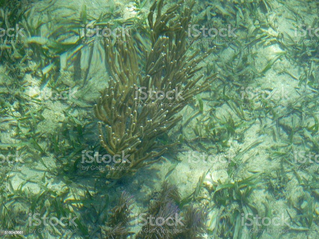 Caribbean Sea life Roatan Honduras stock photo