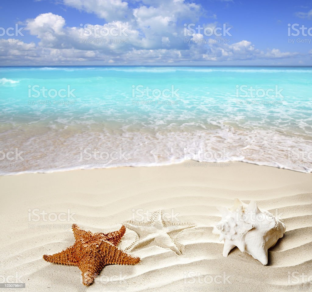 caribbean tropical beach white sand starfish shell stock photo