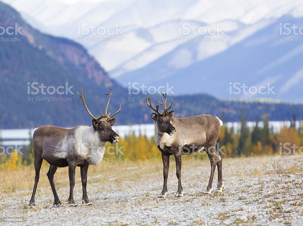 Caribou Canyon stock photo