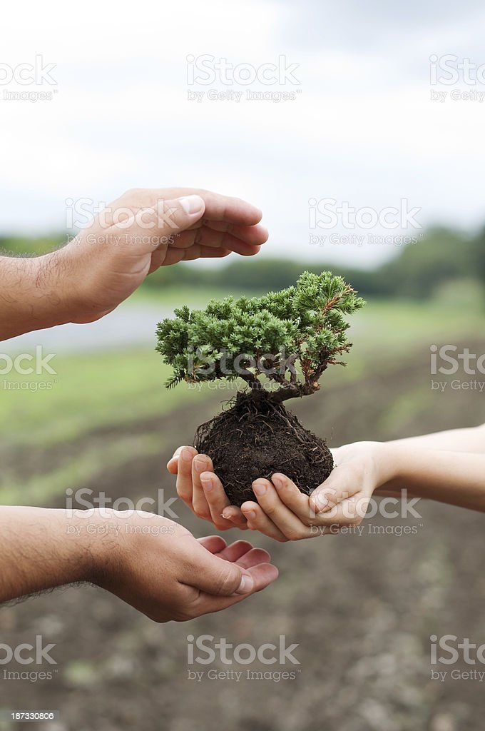 Caring environment. royalty-free stock photo