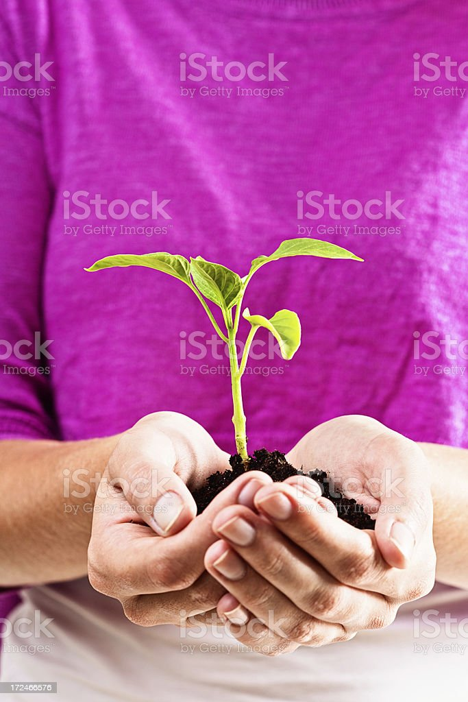 Caring female hands cradle growing seedling royalty-free stock photo