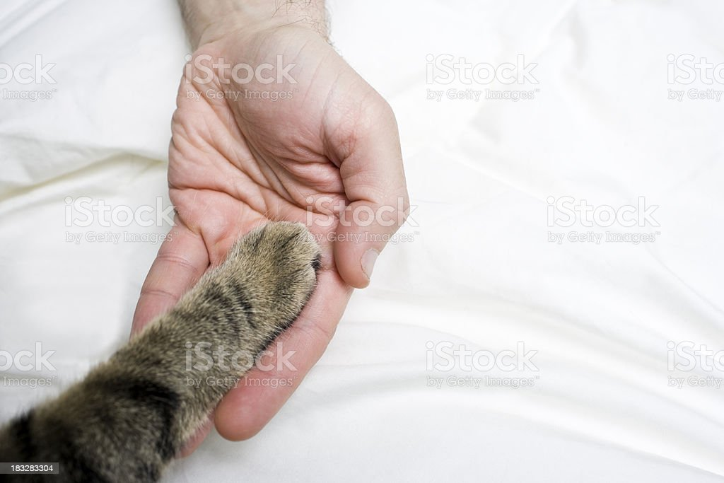 Caring for Cats royalty-free stock photo