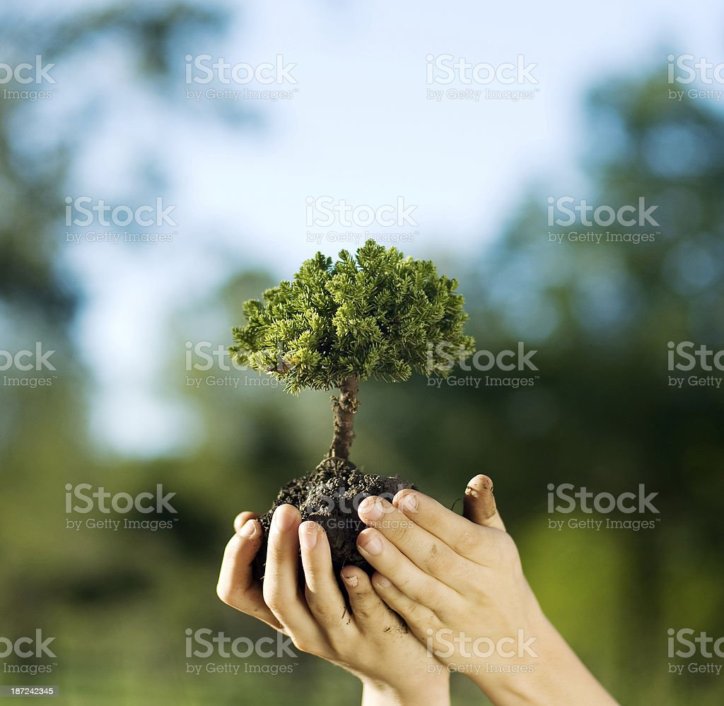 caring for trees and the environment stock photo