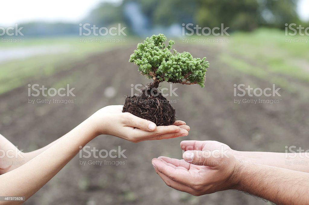 Caring for trees stock photo