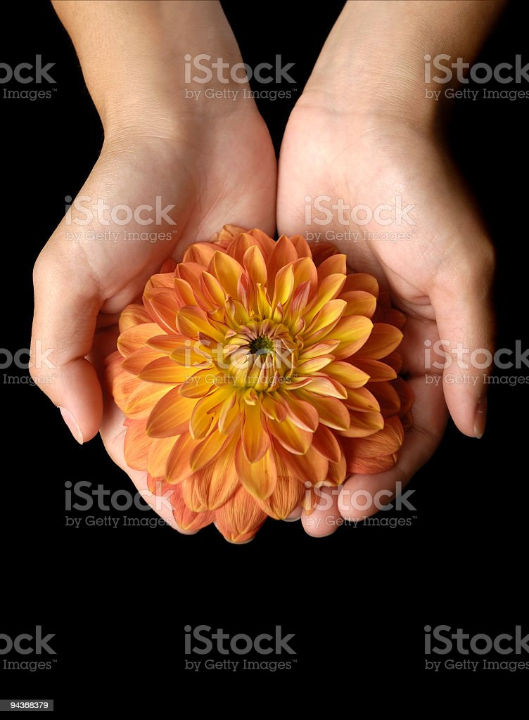 Caring The Nature royalty-free stock photo