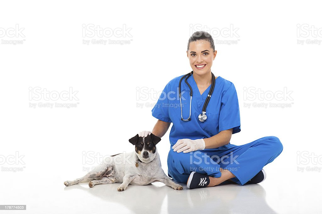 caring vet doctor sitting with pet dog stock photo