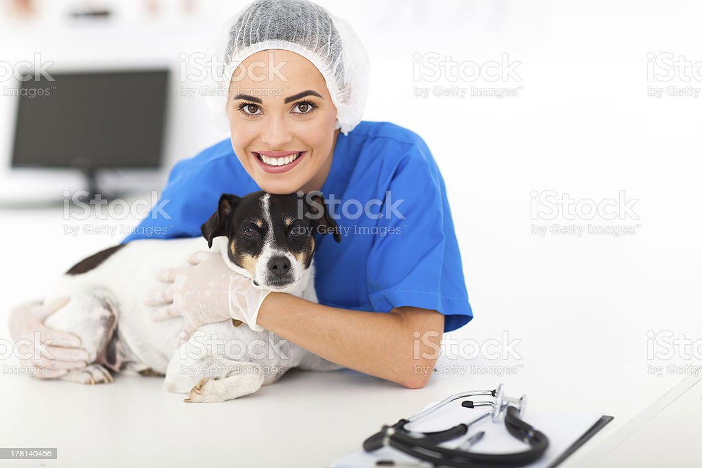 caring veterinarian with dog stock photo