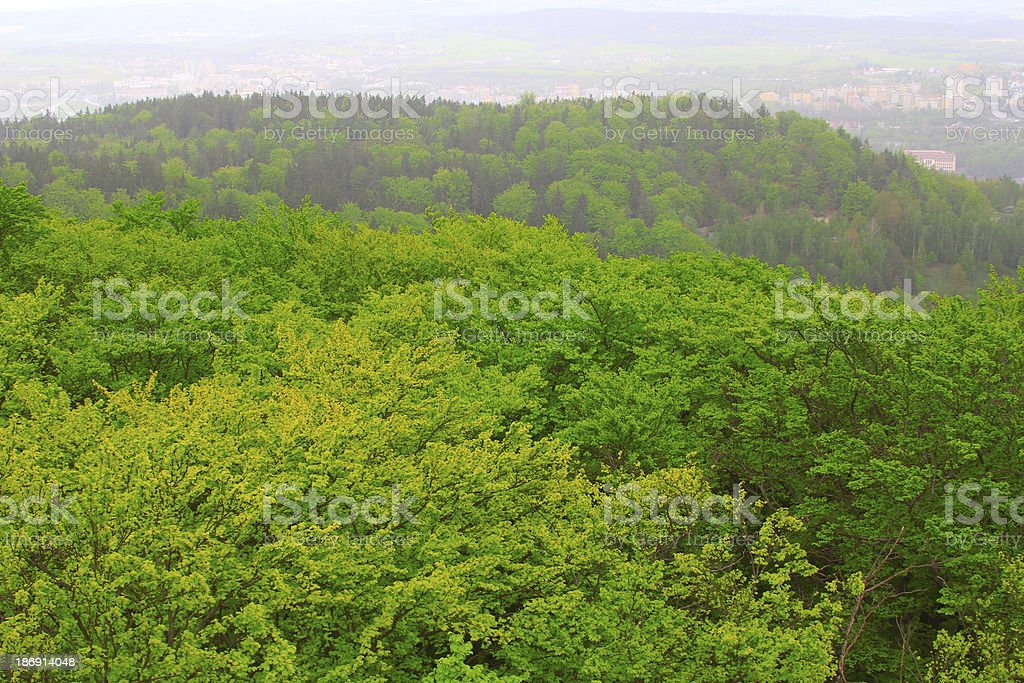 Carlsbad forest royalty-free stock photo