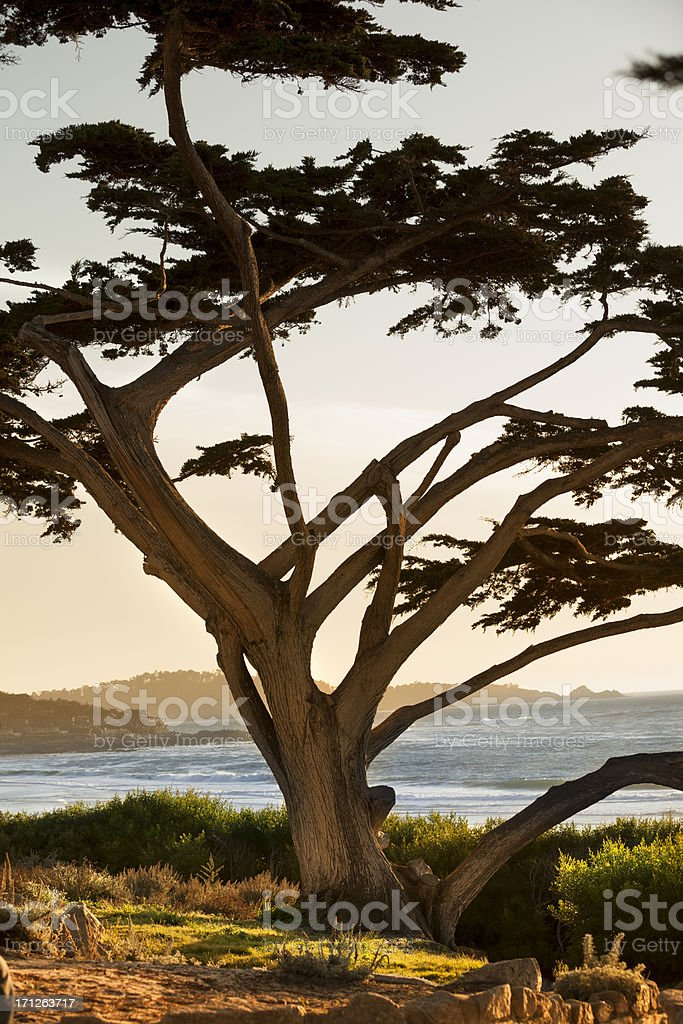 Carmel Beach in Carmel-by-the-Sea stock photo