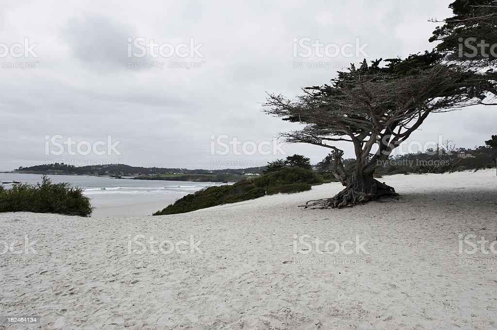 Carmel Beach Views stock photo