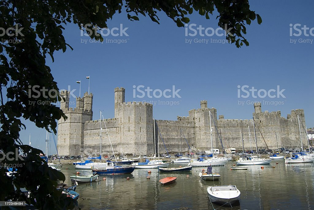 Carnarvon castle framed by lake and tree branch stock photo
