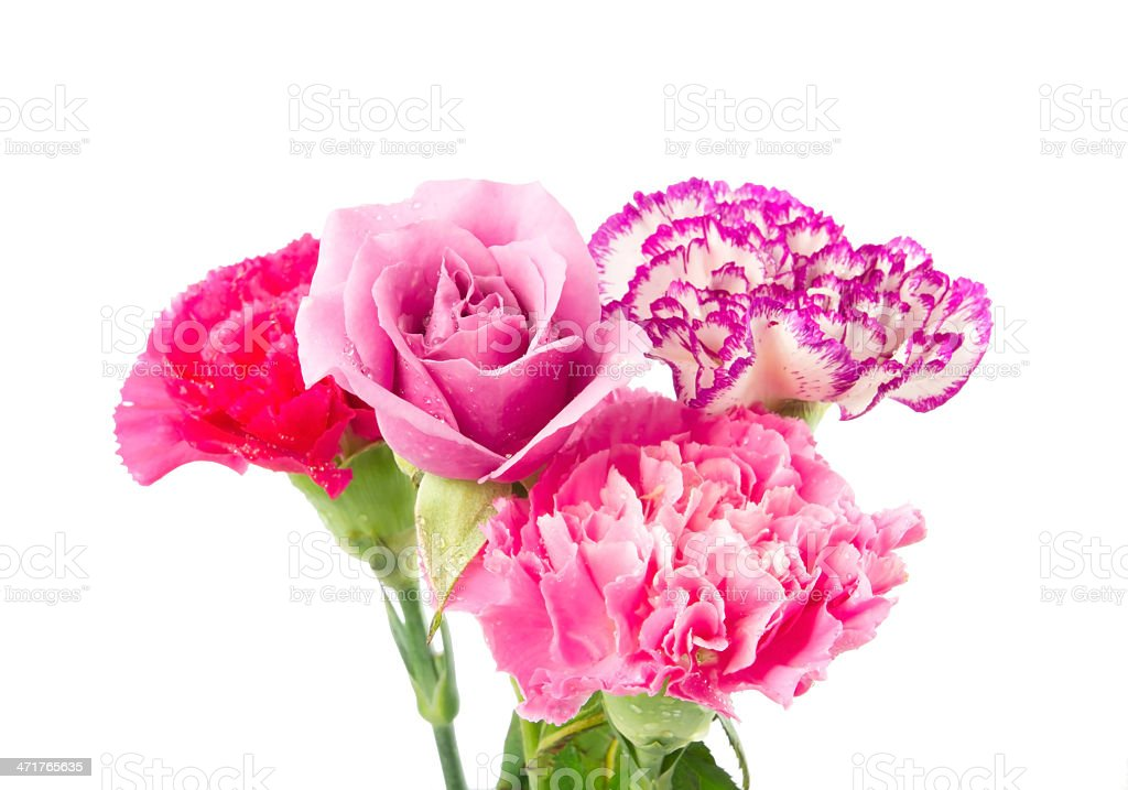 Carnation and rose royalty-free stock photo